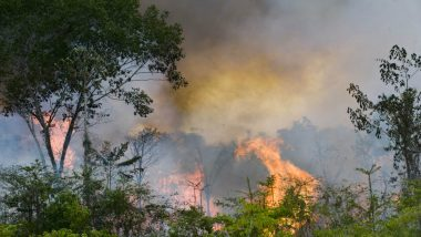 Amazon Rainforest Fires Hit Record Number This Year With 72,843 Incidents Detected So Far by Brazil's Space Research Centre