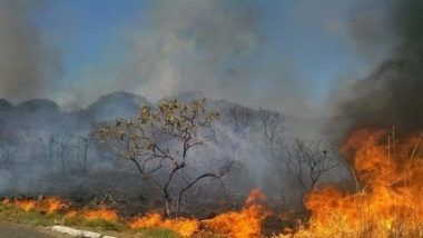 Forest Fires in Chile Destroys Over 3,200 Hectares of Land in Two Days