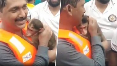 Maharashtra Floods: Viral Video of Baby Monkey Believed to be Rescued From Kolhapur is Actually From Badlapur