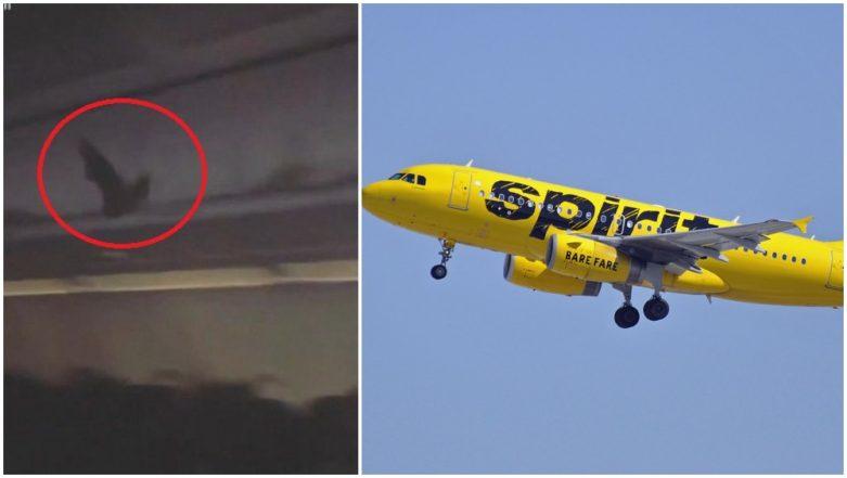 Bat Flying Inside Spirit Airlines Flight Scares Passengers, Video Goes Viral