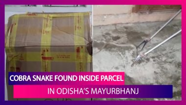 Cobra Snake Found Inside Parcel Delivered By A Courier Company In Odisha's Mayurbhanj