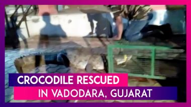 Yet Another Crocodile Rescued From Gujarat's Vadodara