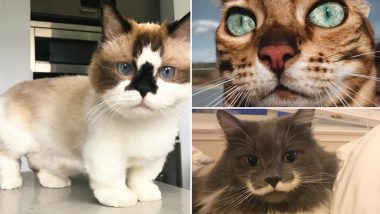 International Cat Day 2019: Menchie the Cat to Venus the Two-Faced Cat, 7 Instagram Kitties You Must Follow Right Now