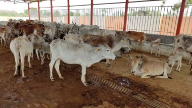 Yogi Adityanath Government Puts Up Stray Cows for Adoption in Uttar Pradesh
