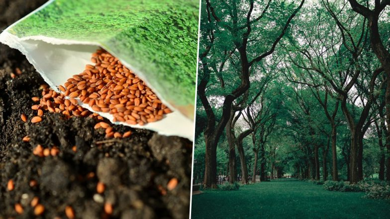 You Can Now 'Dial A Tree'! Ordering Saplings is Just a Phone Call Away in This Punjab City