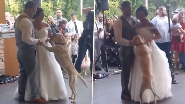 Dog Joins Bride And Groom in Their First Dance at Wedding; Adorable Video Goes Viral