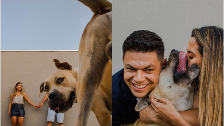 Pet Dog Hilariously Photobombs Couple's Engagement Photoshoot, Adorable Pictures Go Viral