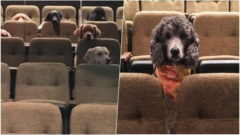 Bestest Doggos Ever! Pictures of Service Dogs Attending Theatre Performance at Stratford Festival in Canada Has Netizens Cheering For Them