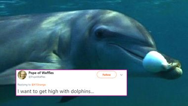 Dolphins Love Getting High on Pufferfish Toxins! New Finding About Aquatic Mammals Gets Twitter High With Funny Memes and Reactions