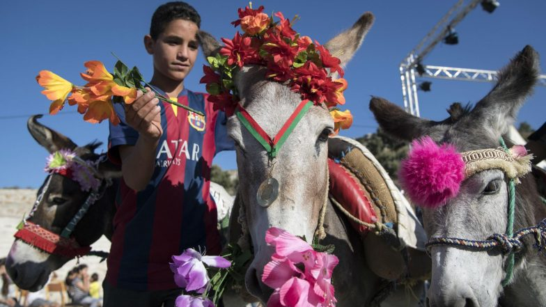 Morocco: 'Cleopatra' The Donkey Wows Villagers By Clinching Top Prize in Beauty Pageant 2019 (Watch Video)