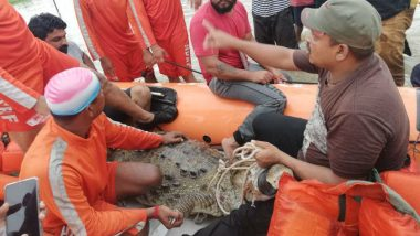 Gujarat Flood: Crocodile Rescued by NDRF from Vadsar in Vadodara