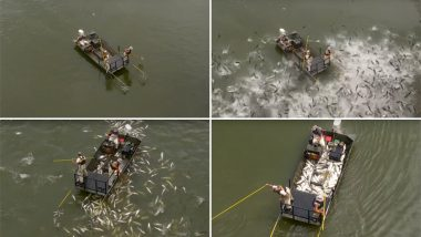 Thousands of Asian Carp Fish Jump Out of Water During Electrofishing in Kentucky (Watch Video)