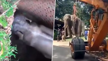 Baby Elephant Rescued by Army After It Fell into a Deep Jungle Well in Jalpaiguri, West Bengal; Heartening Video Goes Viral
