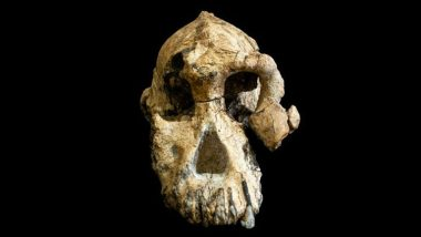Ethiopia: 3.8-Million-Year-Old Skull Yields New Clues on How Humans Evolved