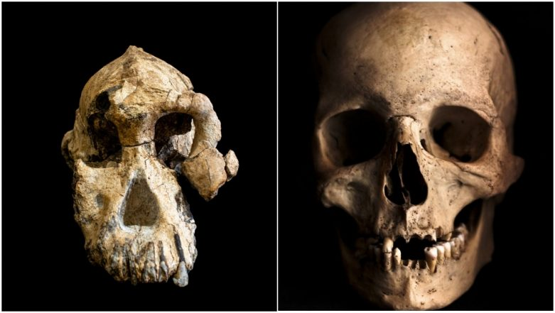 How Did Human Skull Evolve? 3.8-Million-Year-OId MRD Human Skull Discovery in Ethiopia Gives More Details (Watch Video)