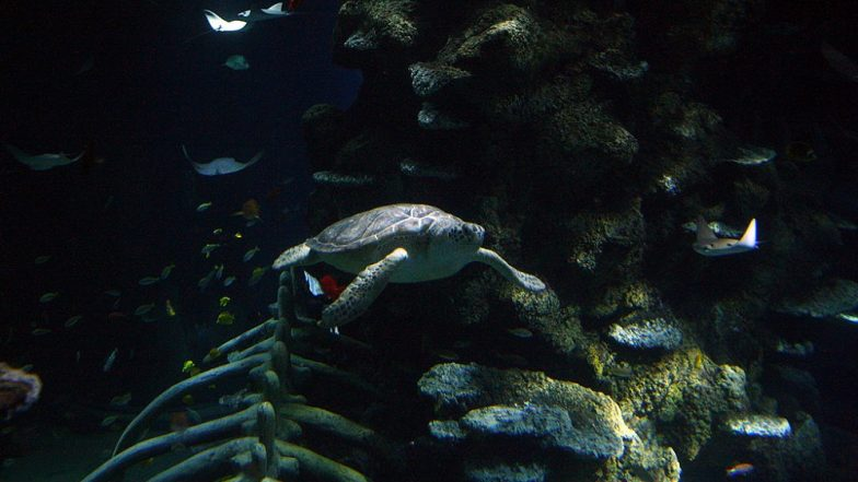 Green Turtles Are Eating Plastic Because It Resembles Their Natural Food of Sea Grass, Says Research