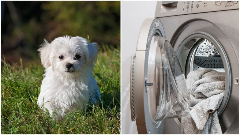 Texas Girl Put Her Pet Dog Into Dryer and Turned it On For Fun! Video Goes Viral