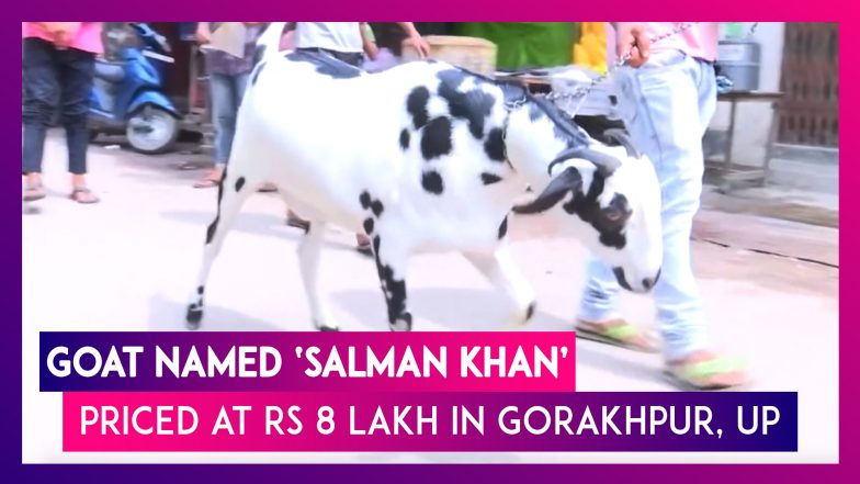 Eid-Ul-Adha: Goat Named 'Salman Khan' Priced At Rs 8 Lakh In UP's Gorakhpur  | Watch Videos From LatestLY
