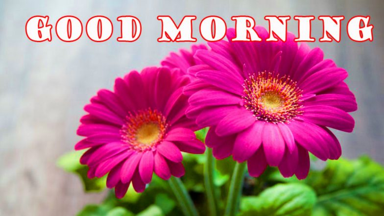 Good Morning Quotes Hd Images And Whatsapp Stickers For Free Download Online Wish Your Family And Friends With Beautiful Flower Wallpapers And Gif Messages Latestly