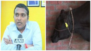 Uttar Pradesh: Gorakhpur Administration Carries Out 'Geo-Tagging' Cattle to 'Keep Count' & 'Penalise Owners of Stray Animals', See Pics