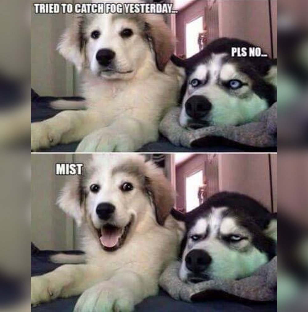 International Dog Day 2019: Funny Memes and Jokes About ...