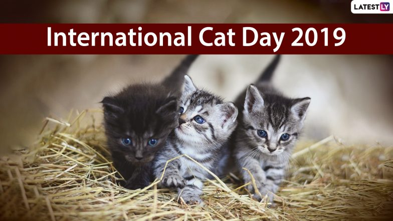International Cat Day 2019: Funny Cat Videos of Cute Kittens That You GOT to See Right Meow!