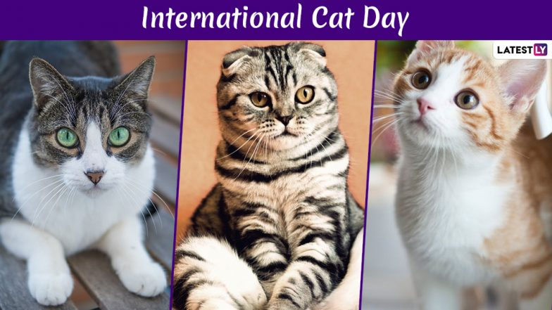 International Cat Day 2019 Date: History And Significance of the Day That Celebrates Felines