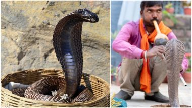 Jhapan Mela 2019 Date: Significance And Celebrations Related to the Snake Festival in West Bengal