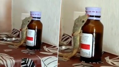Lizard Licks Medicine From Syrup Bottle! WhatsApp Viral Video Draws Attention to Storing Medicines at Home Safely