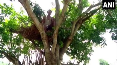 Odisha Man Lives on Treetop to Protect Himself From Wild Elephants Which Destroyed His Home