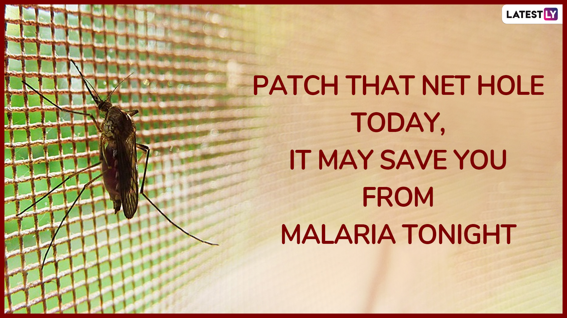 World Mosquito Day 2019: Share These Catchy Slogans On
