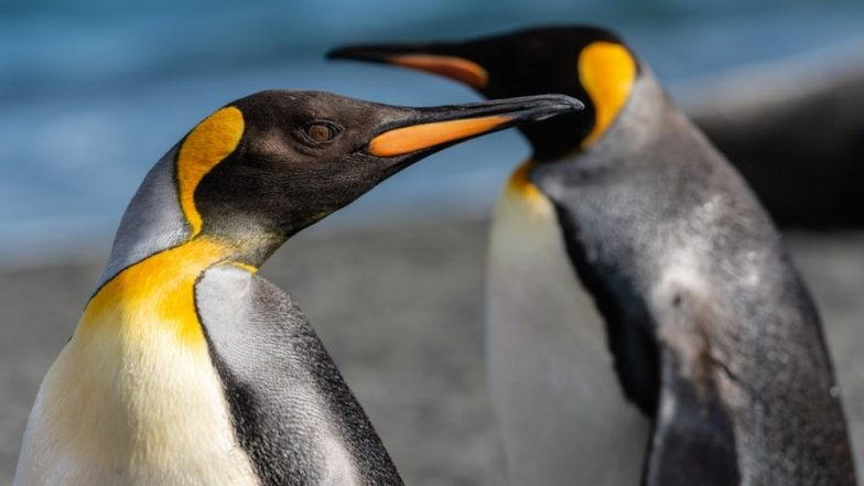 Gay Penguins in Germany Adopt Egg After Trying to Hatch Stone