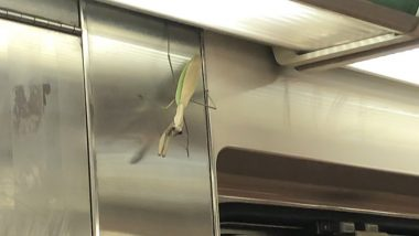 Gigantic Praying Mantis on New York Subway Train Scares Passengers (View Pic)