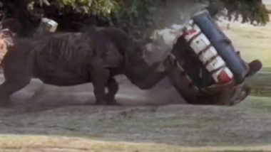 Furious Rhino Attacks Car And Flips it Over Three Times at Serengeti Safari Park in Germany (Watch Video)