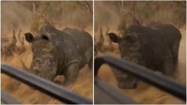 Rhino Chases Safari Jeep For 500 Meters in South African National Park, Terrifying Video Goes Viral