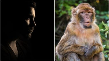 World's First Human-Monkey Hybrid or 'Chimera' Created in China by Spanish Scientists, Organ Harvesting from Animals to Become a Reality
