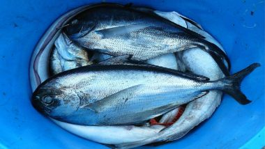 Mercury Poisoning from Seafood: Terrifying Symptoms You Should Not Ignore!