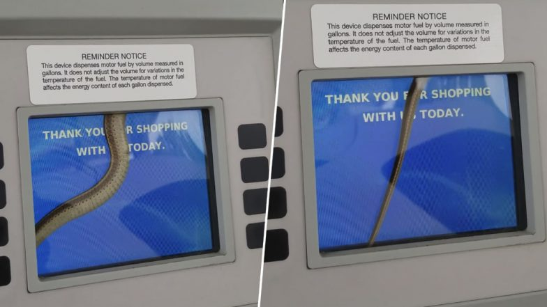 Kansas Woman Finds Snake Crawling on Gas Pump Machine's Touch Screen! Creepy Video Goes Viral