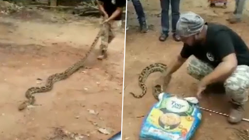 Python, 11-Feet-Long, Rescued From Bhubaneswar's Patharagadia Area in Odisha, Watch Video
