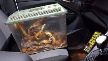 Box Full of Live Snakes Found Outside Vet's Clinic in Frome; Picture of Wriggling Reptiles Goes Viral