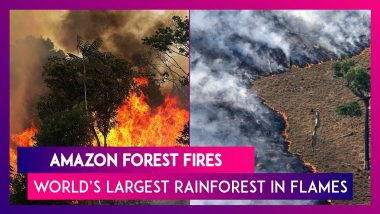 Amazon Forest Fires: Know All About The Devastating Situation Of The World's Largest Rainforest