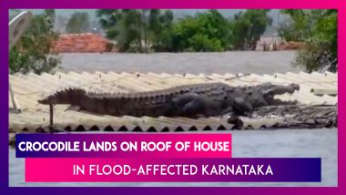 Karnataka Floods: Crocodile Lands On Roof Of House, The Giant Reptile Sits With Its Mouth Open