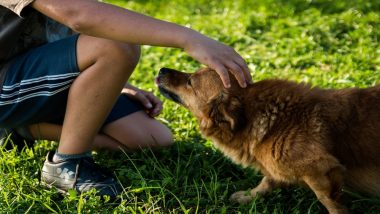 Working With Animals Can Increase Depression Risks, Burnout and Compassion Fatigue, Says Study