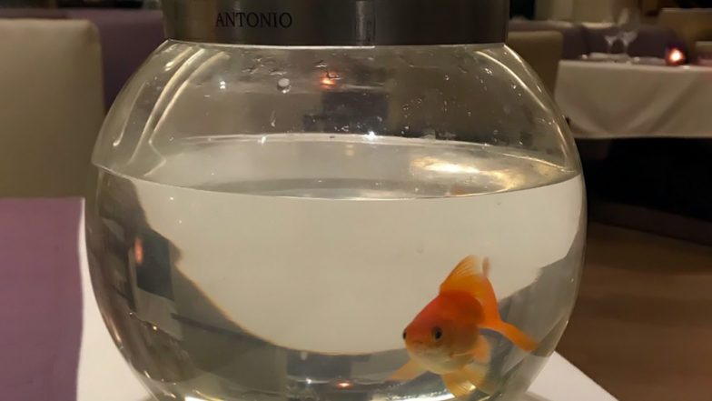Mumbai Trident Hotel Earns Praises for Placing Goldfish As 'Perfect Dinner Companion' for Customer Who Was Eating Alone (View Viral Pic)