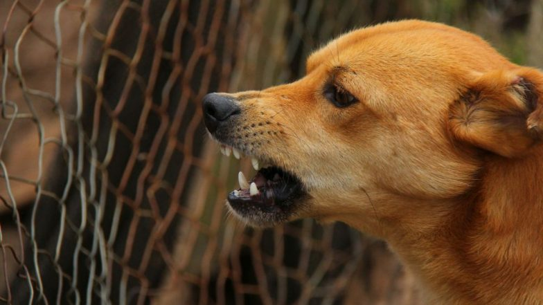 Rabies: How to Spot a Rabid Animal – 10 Signs and Symptoms to Look Out For