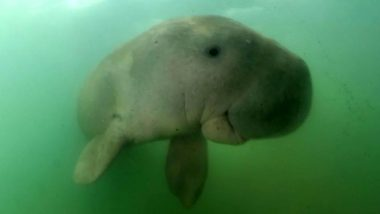 Thailand's Beloved Baby Dugong 'Mariam' Dies Due to Plastic Pollution! Three Other Heart-Breaking Times When Plastic Killed Sea Creatures