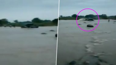 Watch Video: Tractor Swept Away by Water While Trying to Cross Flooded Bridge in Mandsaur
