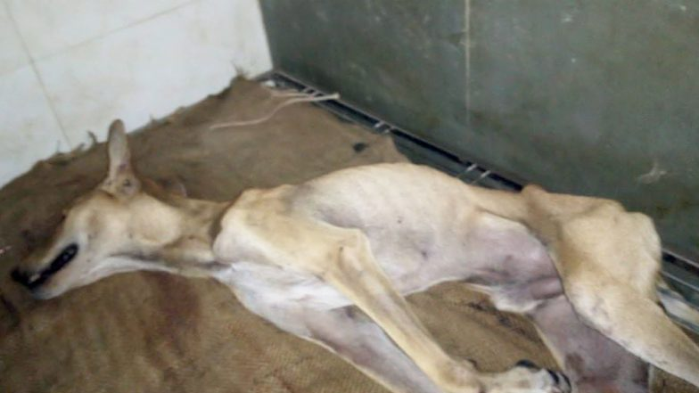 Mumbai's Stray Dog Lucky Who Was Mercilessly Beaten for Taking Shelter During Rains in Society Passes Away