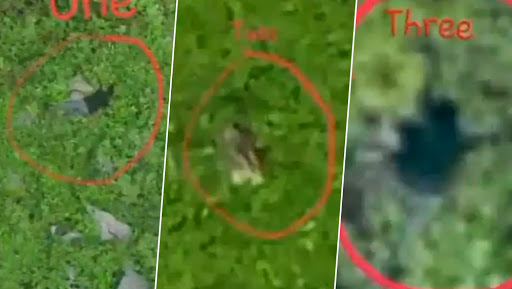 Video of Infiltration Bid Foiled by Indian Army Surfaces on Social Media; Bodies of Dead Pakistani Terrorists Seen in Footage