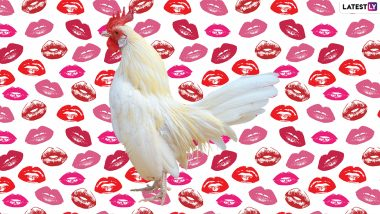 Do Not Kiss Chickens! CDC Warns Against Salmonella Infection Caused By Kissing, Cuddling Hens